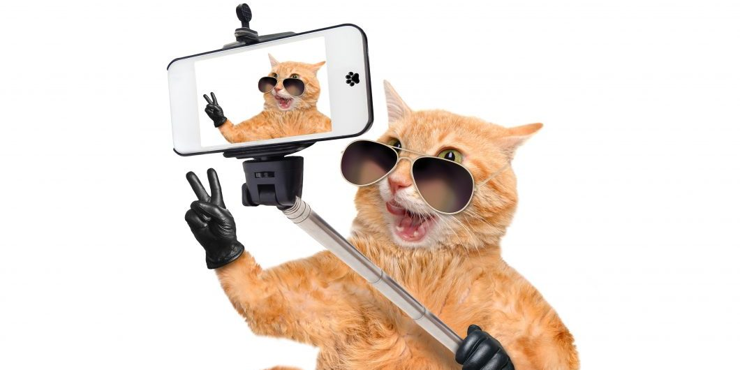 cat-taking-a-selfie-with-a-smartphone-by-rasulovs-via-istock