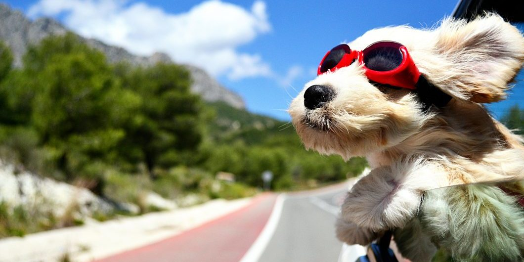 holiday-dog-by-bildagentur-zoonar-via-shutterstock
