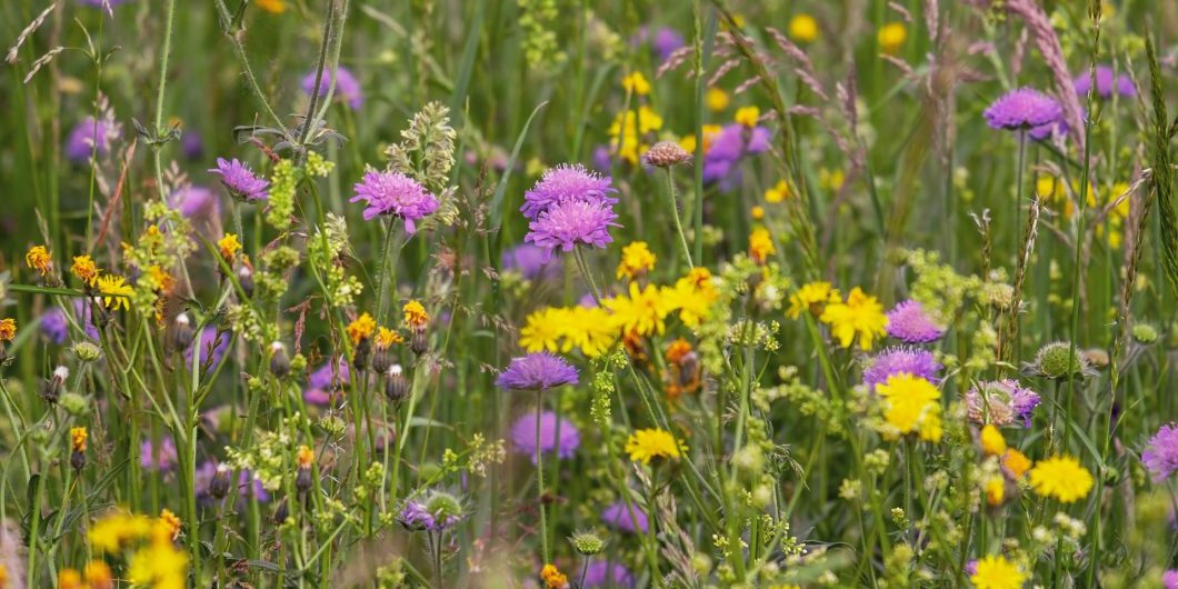 wild-flower-meadow-3386014x